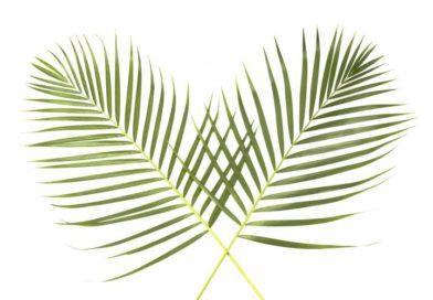 INKONSISTENSI, Refleksi Minggu Palma